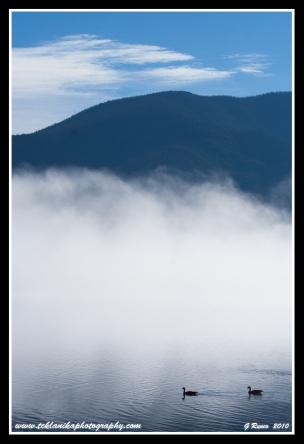 Geese_In_Fog