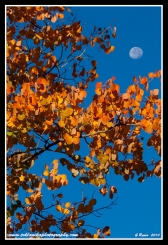 September_Moon