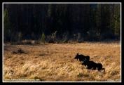 Two_Moose_Sunset
