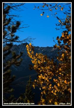 Autumn_Views