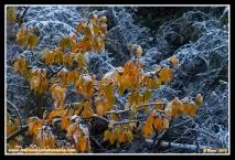 Clinging_Leaves