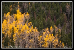 Colors_Of_Fall