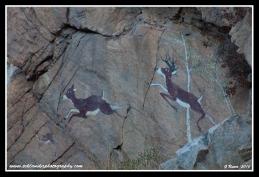 Deer_Rock