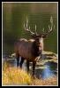 Lake_Bull