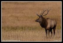 October_Bull