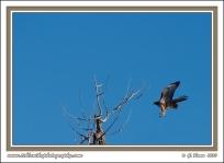 Hawk_Takeoff