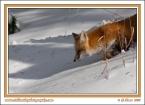 Snow_Hunter