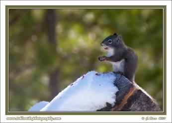Squirrel_Snack