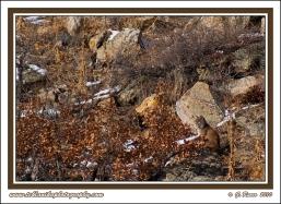 Bobcat_Ridge