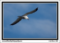 Fly_Over