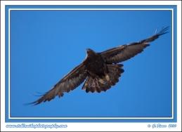 Golden_Flight