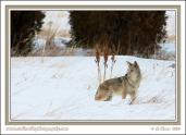 Snowy_Hunter