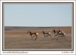 Speed_Goats