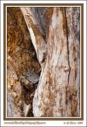 Cottonwood_Nest