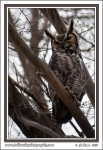 Father_Owl