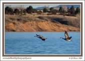 Geese_Flying_Over_The_Lake
