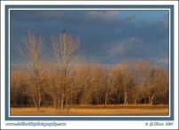 Hawk_Landscape
