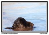 Lake_Beaver