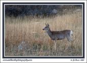 March_Muley