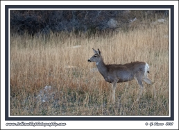 March_Muley