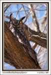 Owl_In_The_Wind