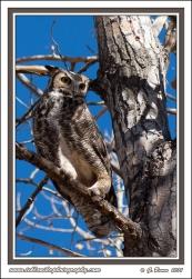 Owl_Legs