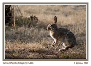 Bouncing_Bunny
