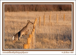 Fence_Jumper