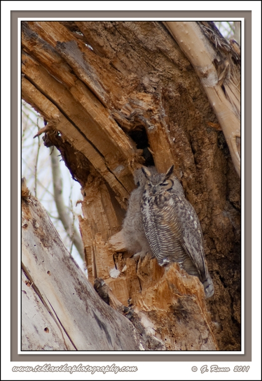 Guarding_The_Owlet
