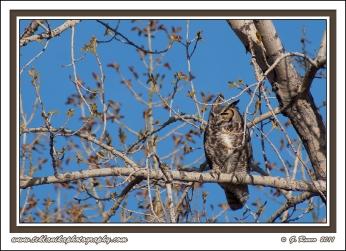 Nest_Watch