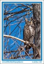 Owl_Against_Blue_Sky