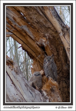 Owl_Family_Portrait