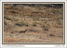 Prairie_Hunter