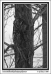 Tree_Camo