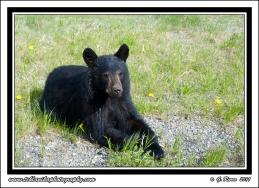 Bear_Break