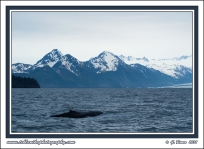 Glacier_Whale