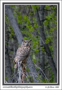 Mama_Owl
