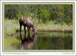 Moose_Pond