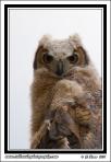 Owlet_Closeup