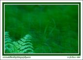 Summer_Greens