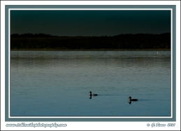 Sunset_Ducks