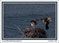 The_Nest