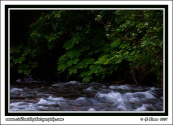 Bear_Creek