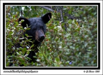 Close_Bear