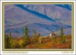 Caribou_In_Fall