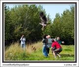 Eagle_Release