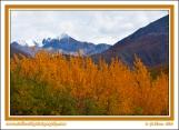 Fall_In_Alaska