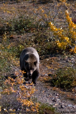 Grizzly_Approach