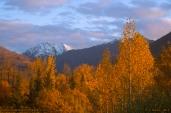 Alaskan_Fall