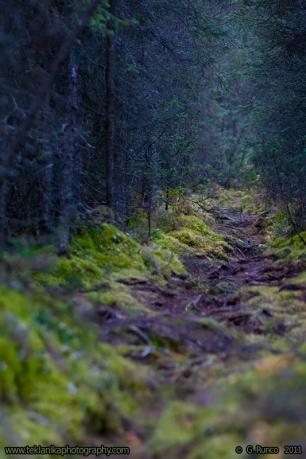 Bear_Trail